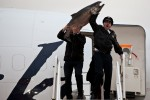 Alaska pilot Trent Davey holds up a 55 pound Copper River salmon with first officer Andy Kullick (Photo by Jeremy Dwyer-Lindgren/NYCAviation)