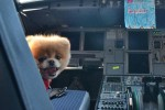 Boo the Dog at the controls of a Virgin America Airbus. (Photo by Virgin America)
