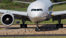 Photo of the Day: ANA's 777 arrival to Washington Dulles is greeted by hundreds of birds. (Photo by Nick Peterman)