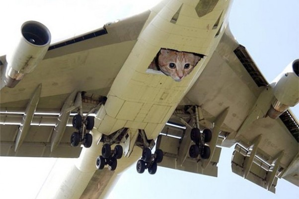 Cats on a plane.