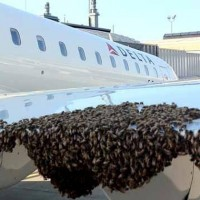 Delta CRJ with bees. (Photo via MyFoxNY)