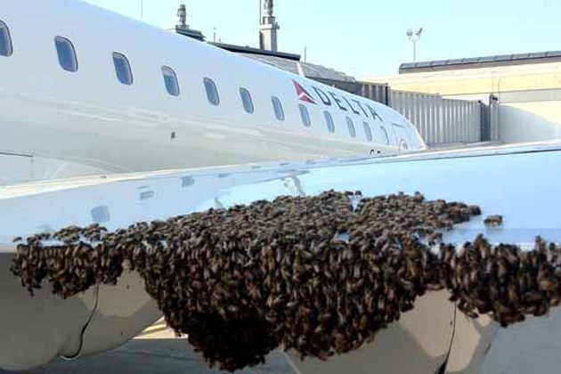 Swarm Of Bees Delays Delta Flight In Pittsburghnycaviation