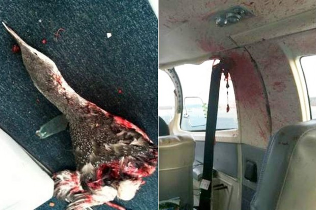 Messy Bird Strike Leaves Cape Air Passengers Bloodied But
