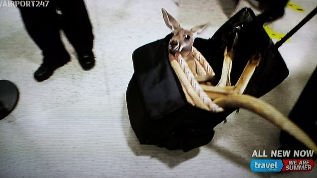 Is there an option for a carry on kangaroo on the check in kiosk?
