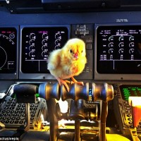 a chick in the cockpit